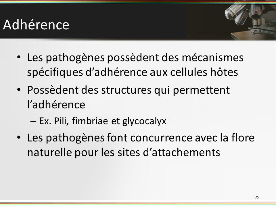 Adhérence Les pathogènes possèdent des mécanismes spécifiques dadhérence aux cellules hôtes Possèdent des structures qui permettent ladhérence – Ex. P