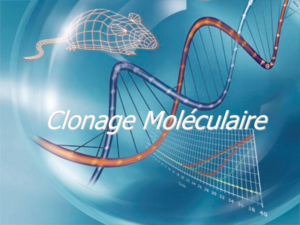 Clonage Moléculaire