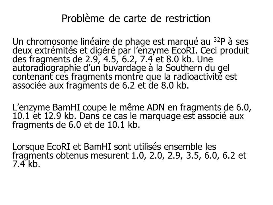 Problème de carte de restriction Un chromosome linéaire de phage est marqué au 32 P à ses deux extrémités et digéré par lenzyme EcoRI. Ceci produit de