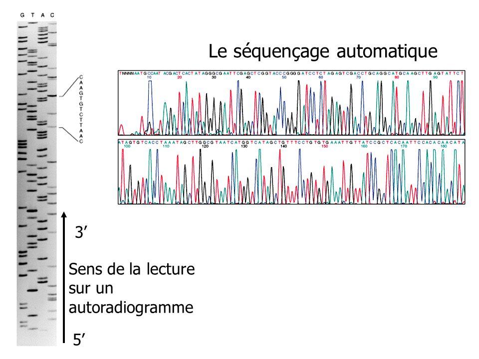Le séquençage automatique Sens de la lecture sur un autoradiogramme 5 3