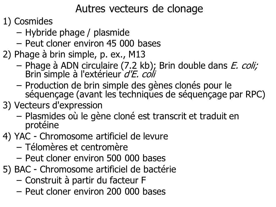 Autres vecteurs de clonage 1) Cosmides –Hybride phage / plasmide –Peut cloner environ 45 000 bases 2) Phage à brin simple, p. ex., M13 –Phage à ADN ci