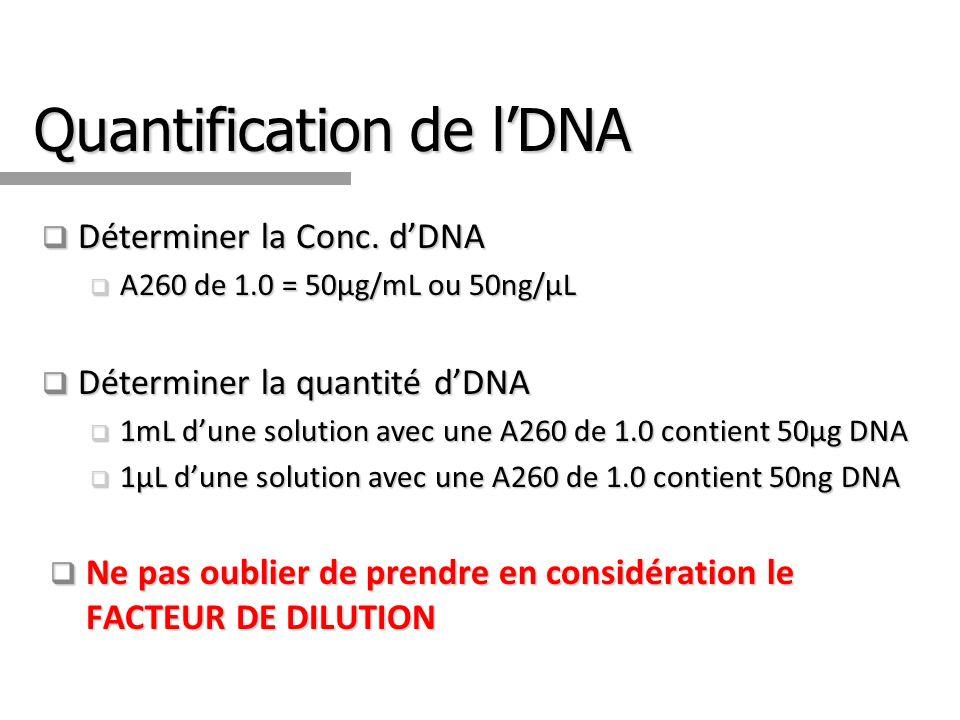 Quantification de lDNA Déterminer la Conc. dDNA Déterminer la Conc. dDNA A260 de 1.0 = 50µg/mL ou 50ng/µL A260 de 1.0 = 50µg/mL ou 50ng/µL Déterminer