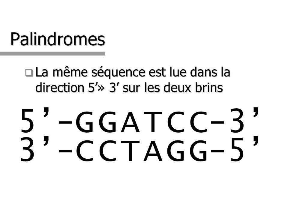 Palindromes La même séquence est lue dans la direction 5» 3 sur les deux brins La même séquence est lue dans la direction 5» 3 sur les deux brins 5-GG