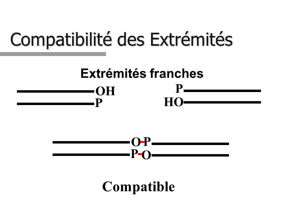 Compatibilité des Extrémités O P O P Extrémités franches HO P OH P Compatible