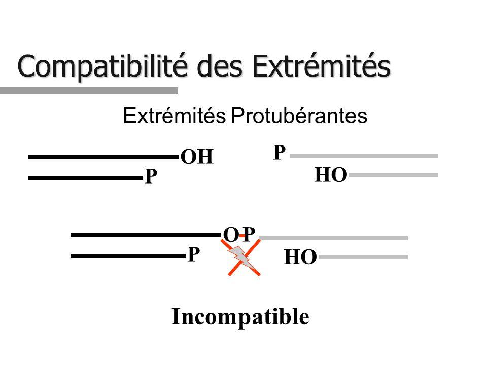 Compatibilité des Extrémités Extrémités Protubérantes HO P OH P HO PO P Incompatible