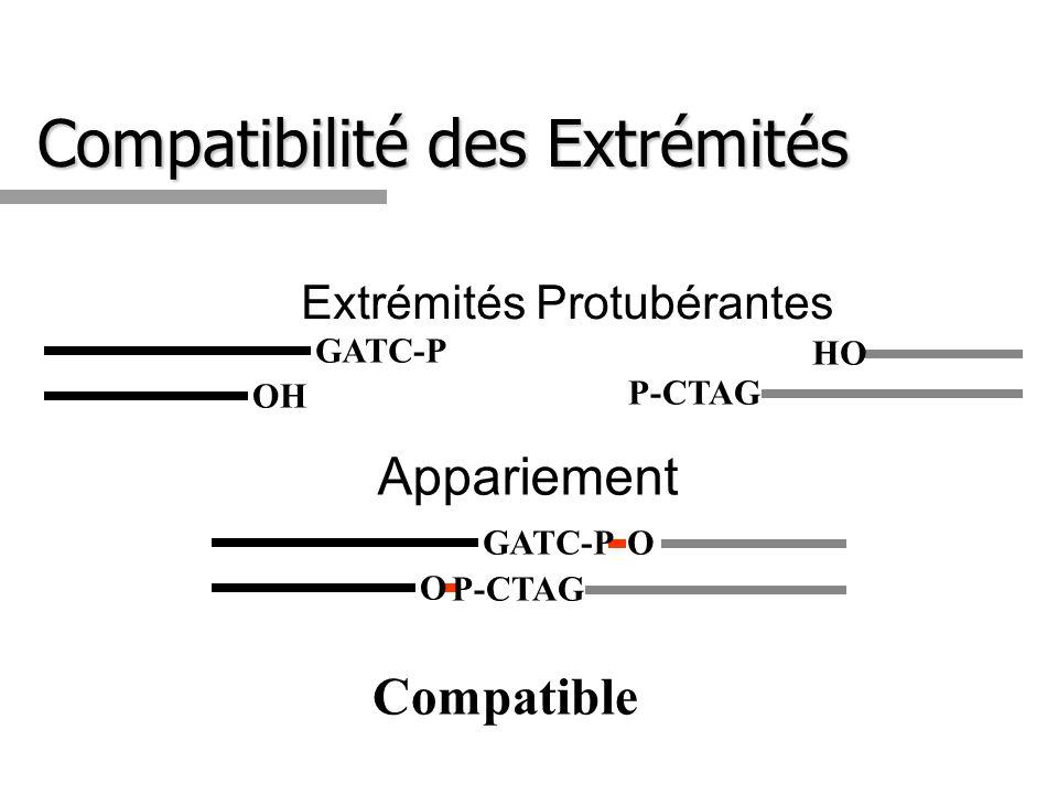 Compatibilité des Extrémités Extrémités Protubérantes P-CTAG HO GATC-P OH Compatible P-CTAG OGATC-P O Appariement