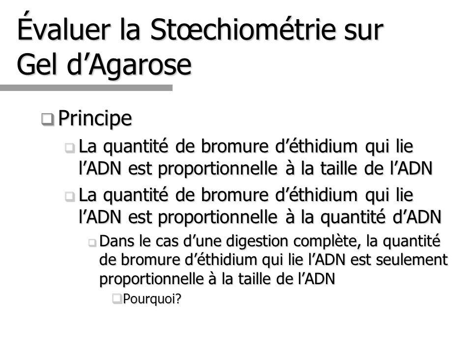 Évaluer la Stœchiométrie sur Gel dAgarose Principe Principe La quantité de bromure déthidium qui lie lADN est proportionnelle à la taille de lADN La q