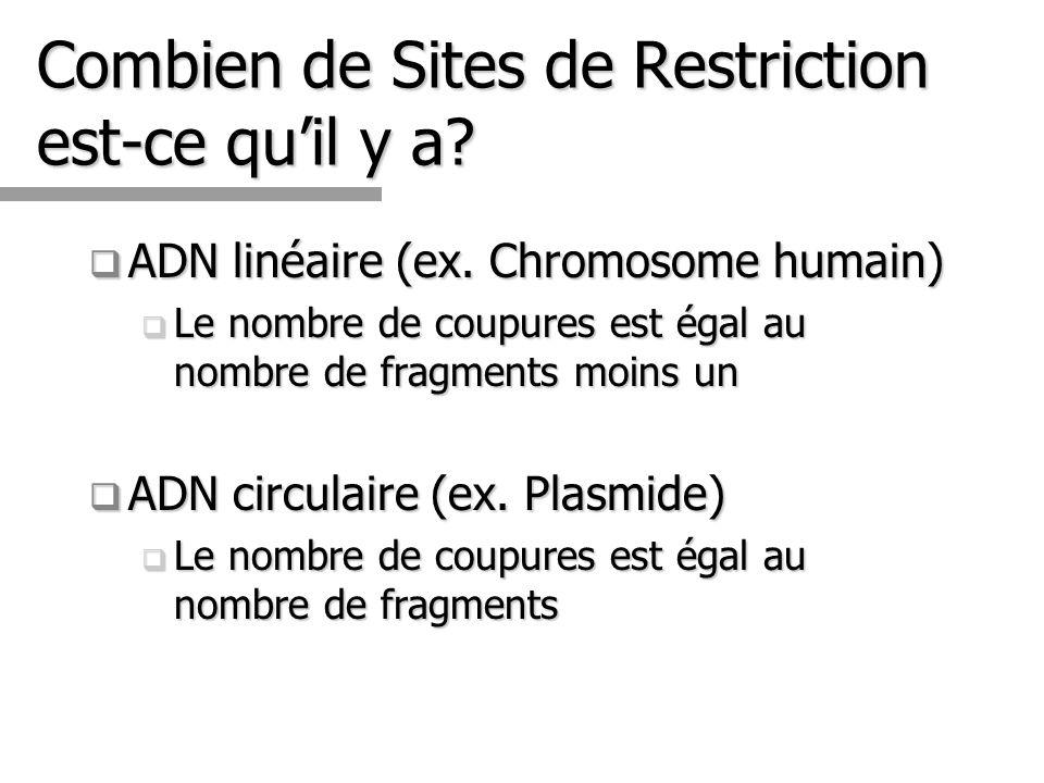 Combien de Sites de Restriction est-ce quil y a? ADN linéaire (ex. Chromosome humain) ADN linéaire (ex. Chromosome humain) Le nombre de coupures est é