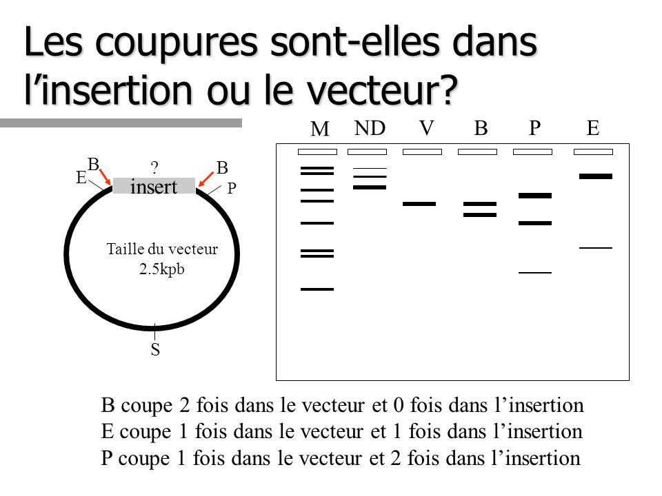Les coupures sont-elles dans linsertion ou le vecteur? B coupe 2 fois dans le vecteur et 0 fois dans linsertion E coupe 1 fois dans le vecteur et 1 fo