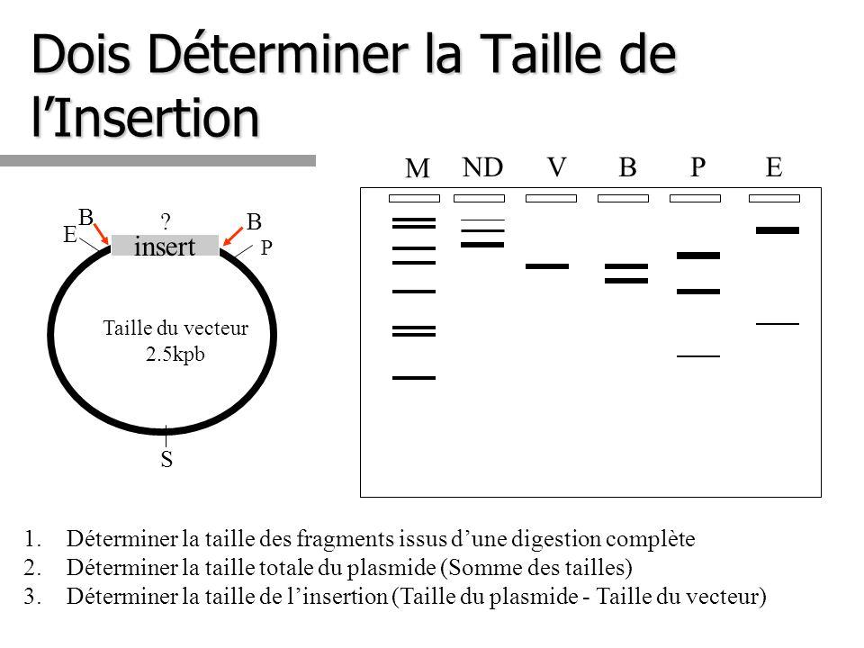 Dois Déterminer la Taille de lInsertion 1.Déterminer la taille des fragments issus dune digestion complète 2.Déterminer la taille totale du plasmide (