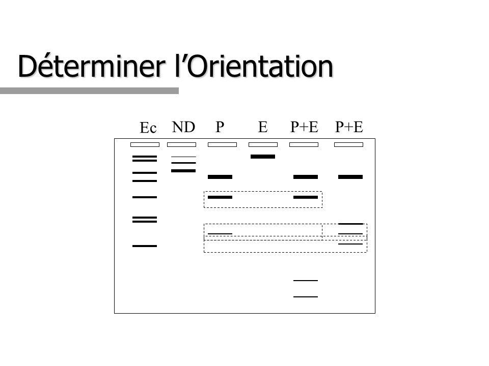 Déterminer lOrientation Ec NDPEP+E