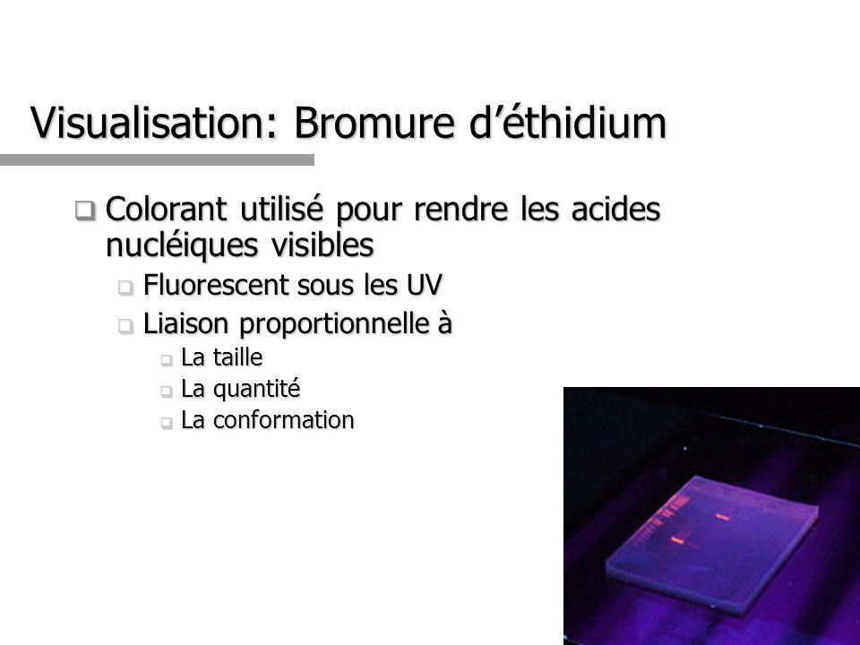Visualisation: Bromure déthidium Colorant utilisé pour rendre les acides nucléiques visibles Colorant utilisé pour rendre les acides nucléiques visibles Fluorescent sous les UV Fluorescent sous les UV Liaison proportionnelle à Liaison proportionnelle à La taille La taille La quantité La quantité La conformation La conformation