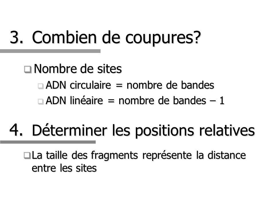 3.Combien de coupures? Nombre de sites Nombre de sites ADN circulaire = nombre de bandes ADN circulaire = nombre de bandes ADN linéaire = nombre de ba