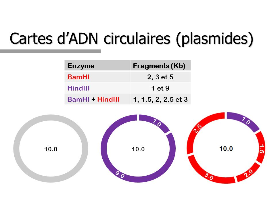 Cartes dADN circulaires (plasmides) EnzymeFragments (Kb) BamHI2, 3 et 5 HindIII1 et 9 BamHI + HindIII1, 1.5, 2, 2.5 et 3 10.0 7.0 10.0 1.0 9.0 3.0 2.0
