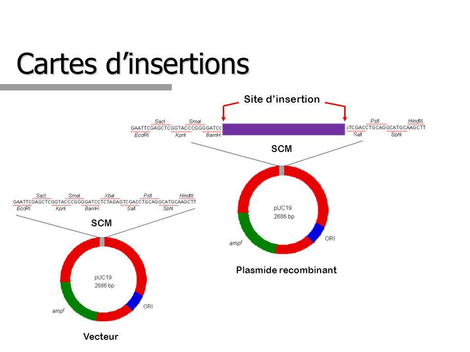 Cartes dinsertions Plasmide recombinant Site dinsertion Vecteur SCM