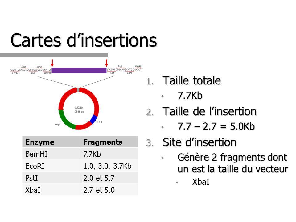 Cartes dinsertions EnzymeFragments BamHI7.7Kb EcoRI1.0, 3.0, 3.7Kb PstI2.0 et 5.7 XbaI2.7 et 5.0 1. Taille totale 7.7Kb 7.7Kb 2. Taille de linsertion