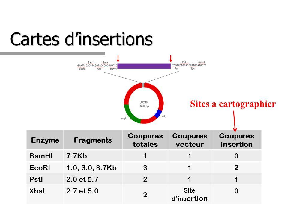 Cartes dinsertions EnzymeFragments Coupures totales Coupures vecteur Coupures insertion BamHI7.7Kb 1 10 EcoRI1.0, 3.0, 3.7Kb 3 12 PstI2.0 et 5.7 2 11