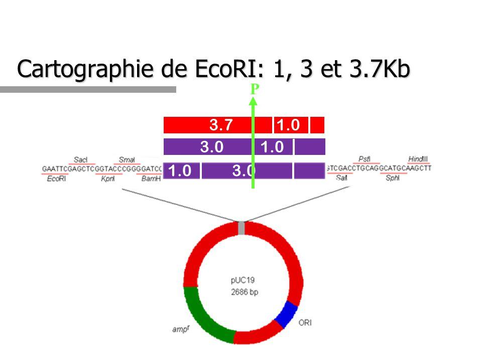 Cartographie de EcoRI: 1, 3 et 3.7Kb 1.0 3.0 3.71.0 3.01.0 P