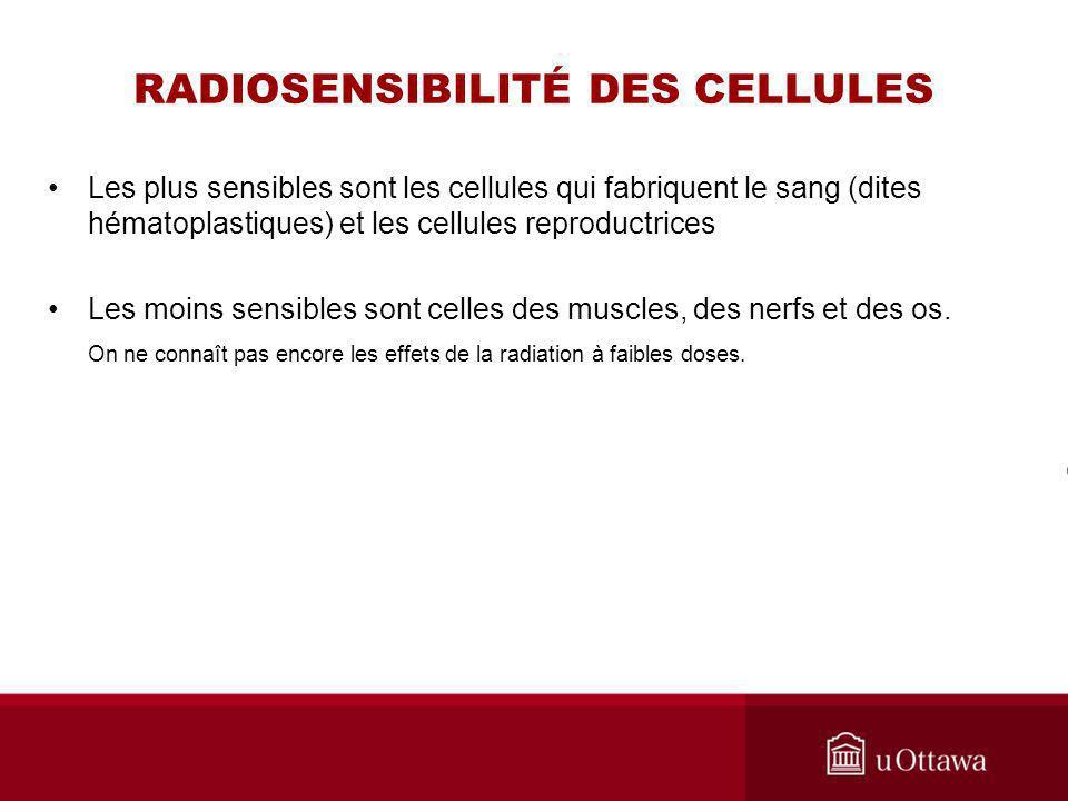 RADIOSENSIBILITÉ DES CELLULES Les plus sensibles sont les cellules qui fabriquent le sang (dites hématoplastiques) et les cellules reproductrices Les