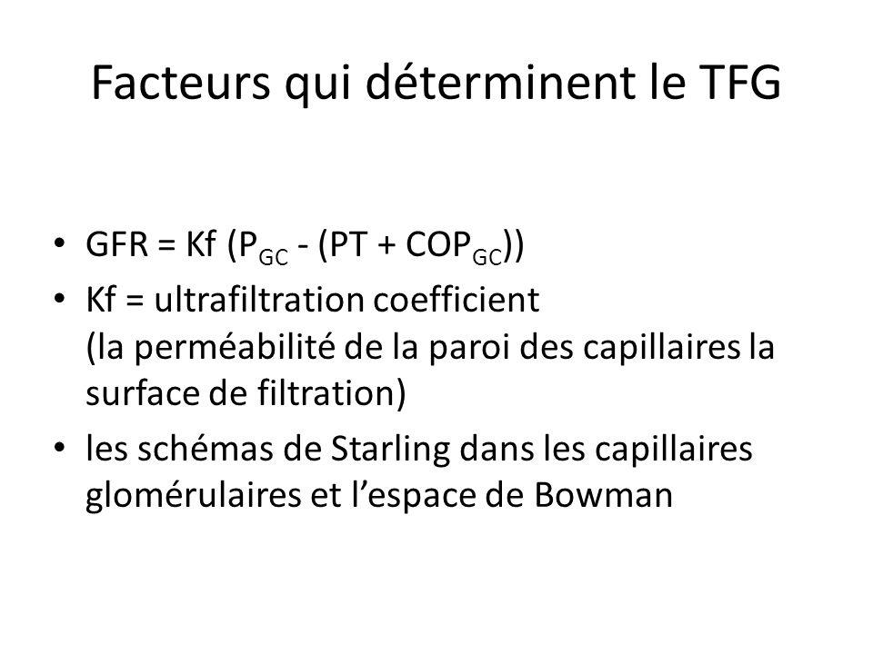 Facteurs qui déterminent le TFG GFR = Kf (P GC - (PT + COP GC )) Kf = ultrafiltration coefficient (la perméabilité de la paroi des capillaires la surface de filtration) les schémas de Starling dans les capillaires glomérulaires et lespace de Bowman