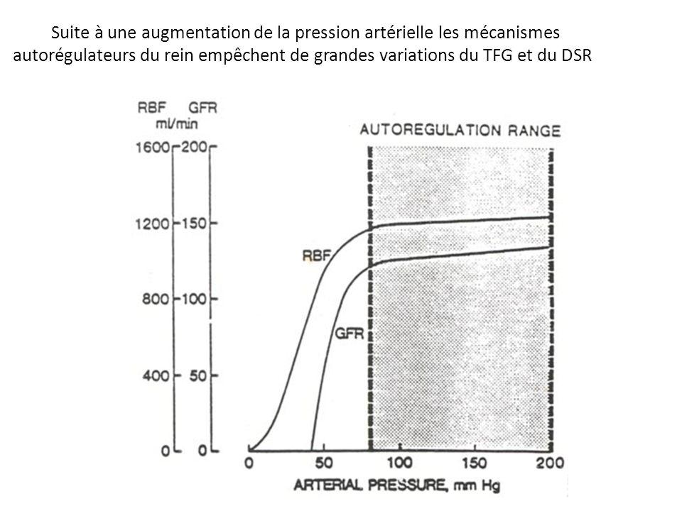 Suite à une augmentation de la pression artérielle les mécanismes autorégulateurs du rein empêchent de grandes variations du TFG et du DSR