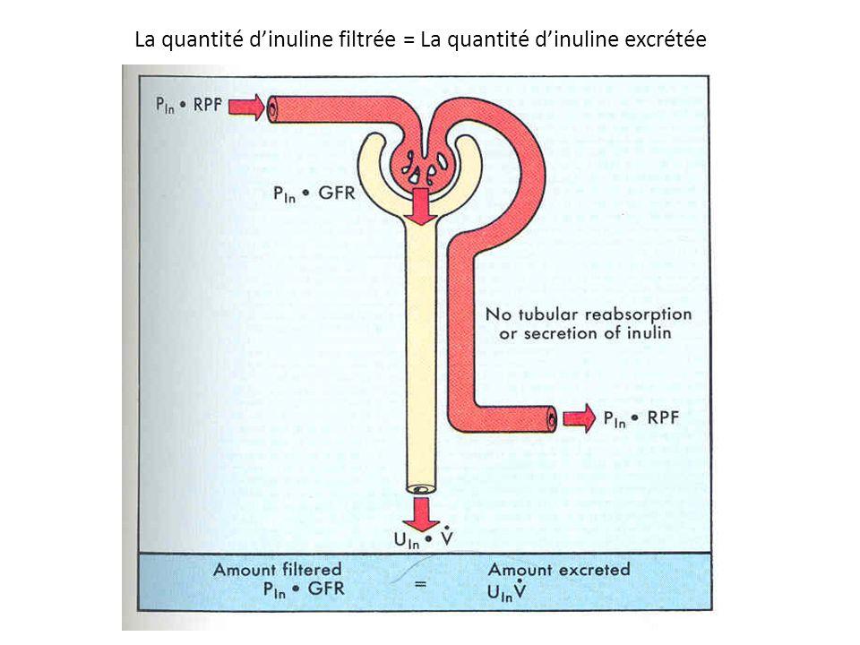 La quantité dinuline filtrée = La quantité dinuline excrétée