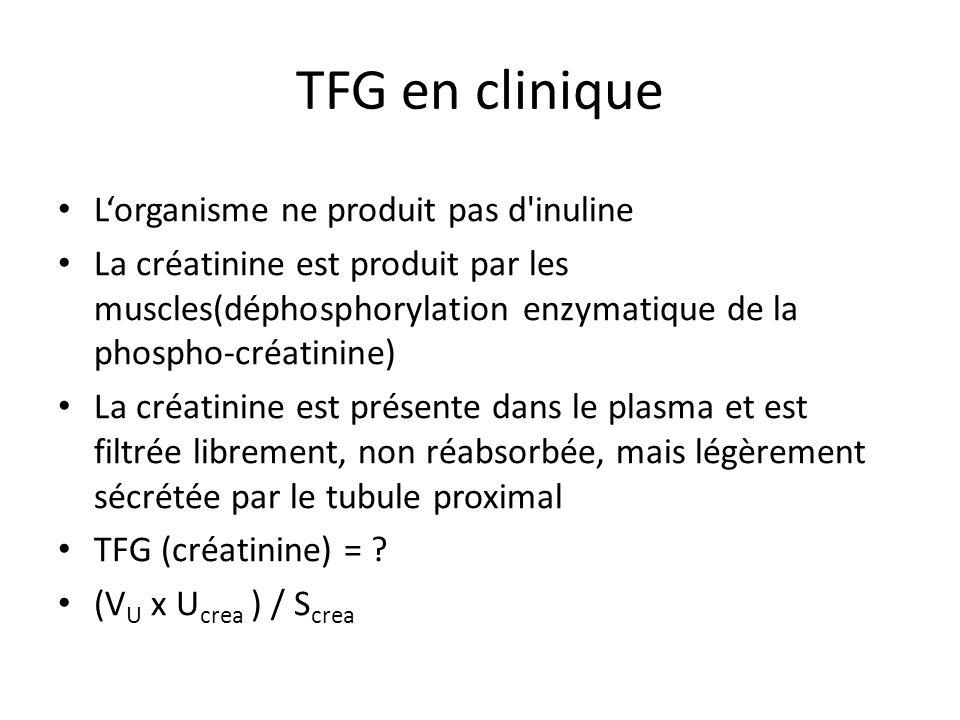 TFG en clinique Lorganisme ne produit pas d inuline La créatinine est produit par les muscles(déphosphorylation enzymatique de la phospho-créatinine) La créatinine est présente dans le plasma et est filtrée librement, non réabsorbée, mais légèrement sécrétée par le tubule proximal TFG (créatinine) = .