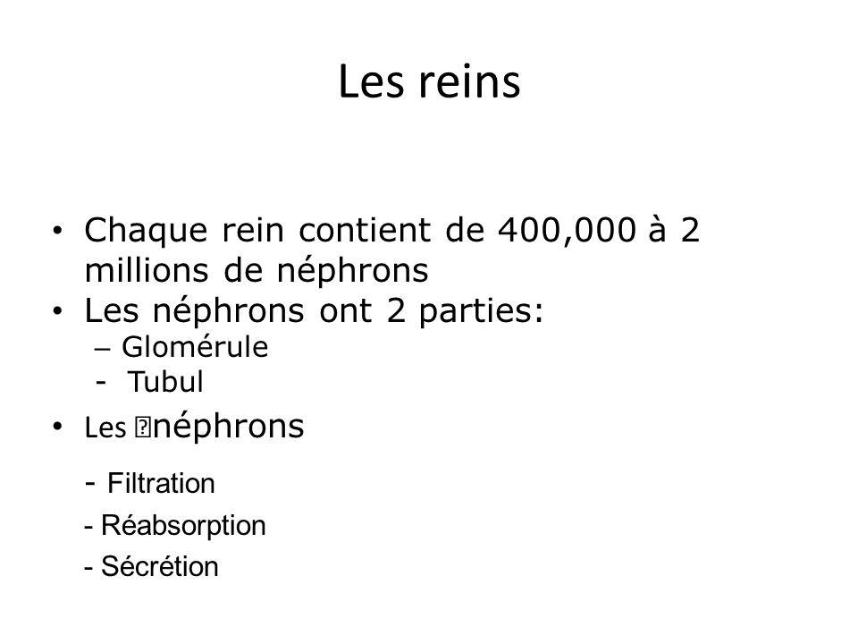 Les reins Chaque rein contient de 400,000 à 2 millions de néphrons Les néphrons ont 2 parties: – Glomérule - Tubul Les néphrons - Filtration - Réabsorption - Sécrétion