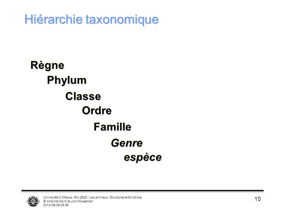 Université dOttawa - Bio 2525 - Les animaux: Structures et fonctions © Antoine Morin et Jon Houseman 2014-06-05 08:37 10 Hiérarchie taxonomique RègneR