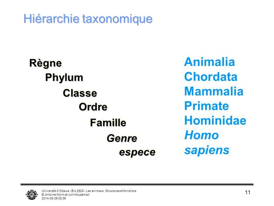 Université dOttawa - Bio 2525 - Les animaux: Structures et fonctions © Antoine Morin et Jon Houseman 2014-06-05 08:37 11 Hiérarchie taxonomique Animal