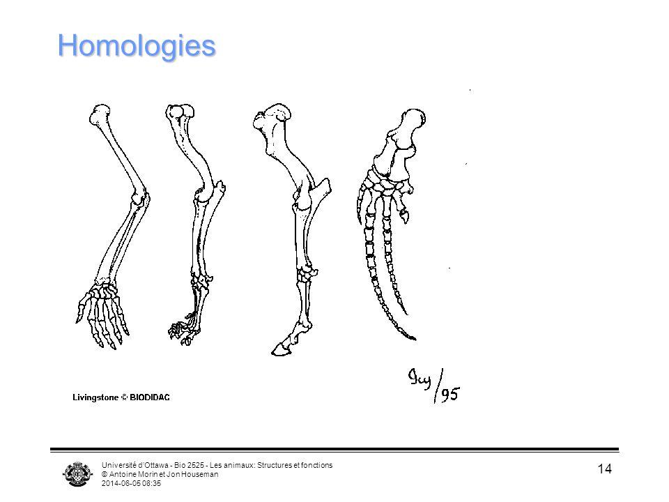 Université dOttawa - Bio 2525 - Les animaux: Structures et fonctions © Antoine Morin et Jon Houseman 2014-06-05 08:37 14 Homologies