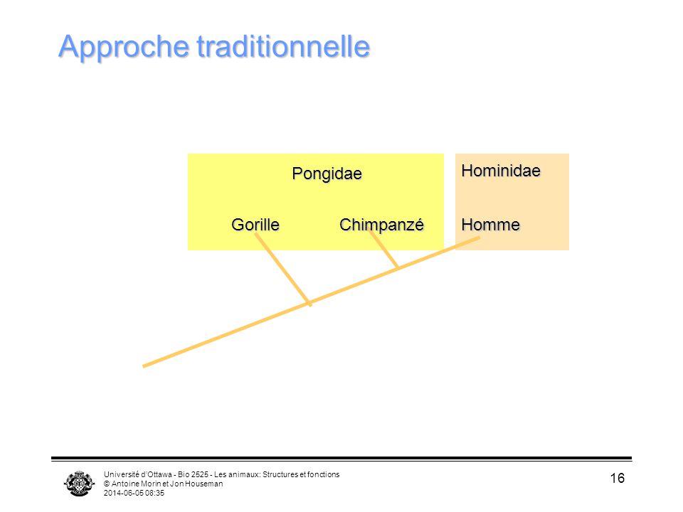 Université dOttawa - Bio 2525 - Les animaux: Structures et fonctions © Antoine Morin et Jon Houseman 2014-06-05 08:37 16 Approche traditionnelle Goril