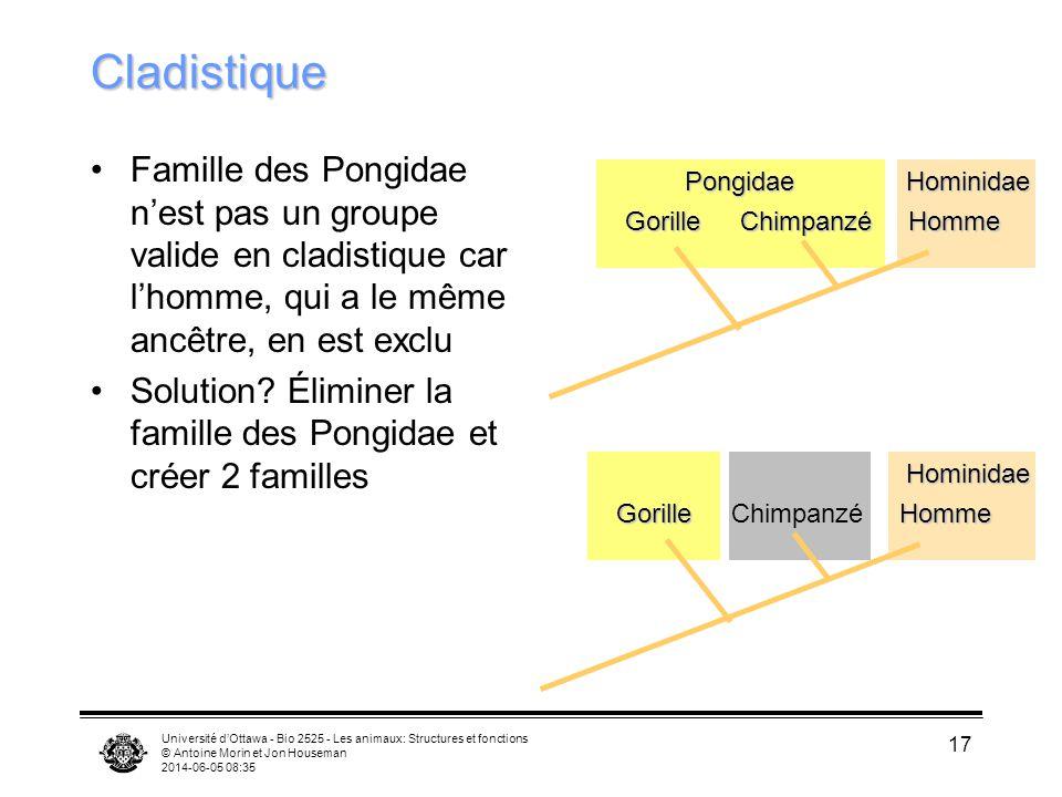 Université dOttawa - Bio 2525 - Les animaux: Structures et fonctions © Antoine Morin et Jon Houseman 2014-06-05 08:37 17 CladistiqueGorilleChimpanzéHo