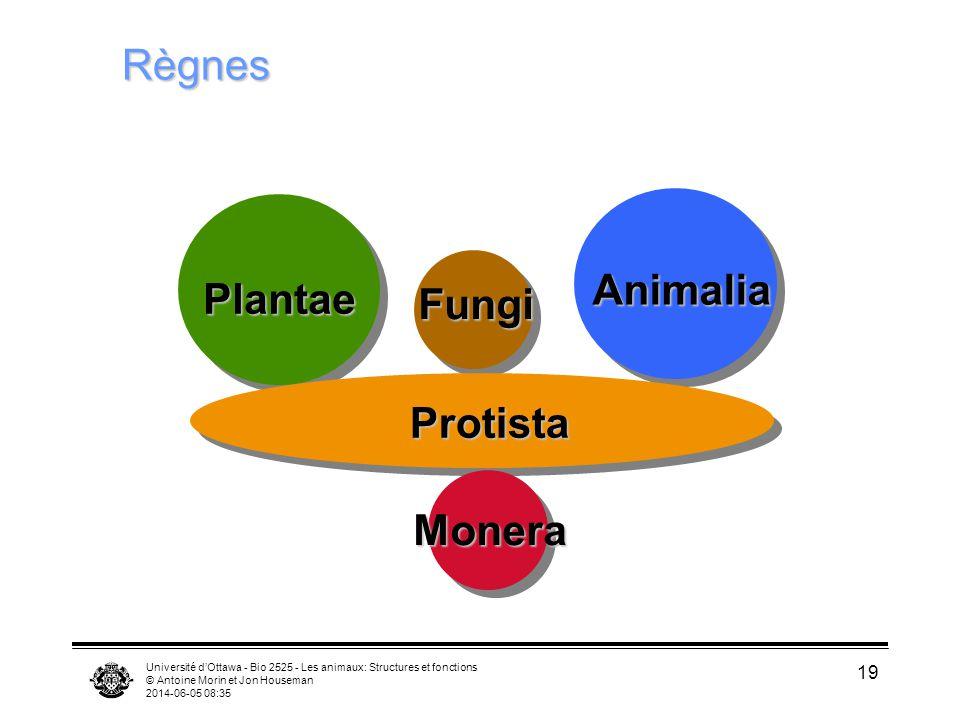Université dOttawa - Bio 2525 - Les animaux: Structures et fonctions © Antoine Morin et Jon Houseman 2014-06-05 08:37 19 Règnes Plantae Animalia Fungi Protista Monera