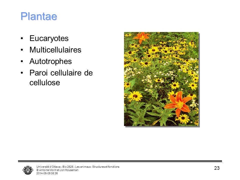 Université dOttawa - Bio 2525 - Les animaux: Structures et fonctions © Antoine Morin et Jon Houseman 2014-06-05 08:37 23 Plantae Eucaryotes Multicellu