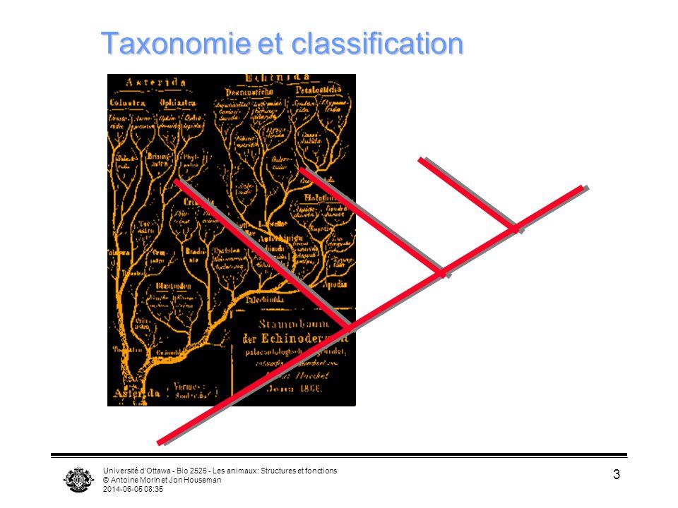 Université dOttawa - Bio 2525 - Les animaux: Structures et fonctions © Antoine Morin et Jon Houseman 2014-06-05 08:37 3 Taxonomie et classification