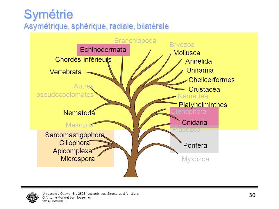 Université dOttawa - Bio 2525 - Les animaux: Structures et fonctions © Antoine Morin et Jon Houseman 2014-06-05 08:37 30 Uniramia Chelicerformes Crust