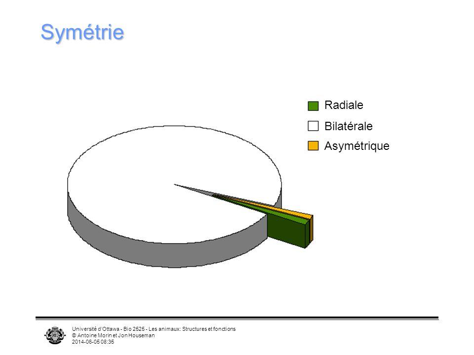 Université dOttawa - Bio 2525 - Les animaux: Structures et fonctions © Antoine Morin et Jon Houseman 2014-06-05 08:37 Symétrie Radiale Bilatérale Asym