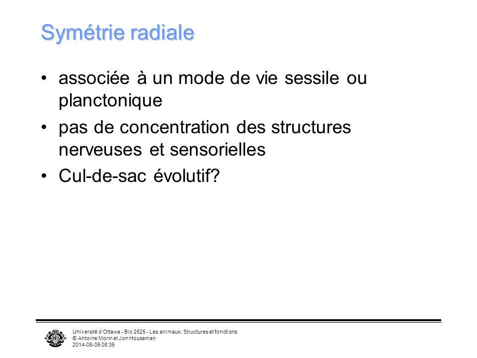 Université dOttawa - Bio 2525 - Les animaux: Structures et fonctions © Antoine Morin et Jon Houseman 2014-06-05 08:37 Symétrie radiale associée à un m