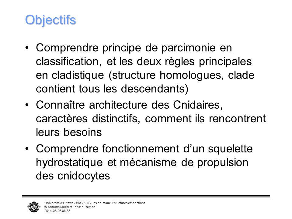 Université dOttawa - Bio 2525 - Les animaux: Structures et fonctions © Antoine Morin et Jon Houseman 2014-06-05 08:37 Objectifs Comprendre principe de