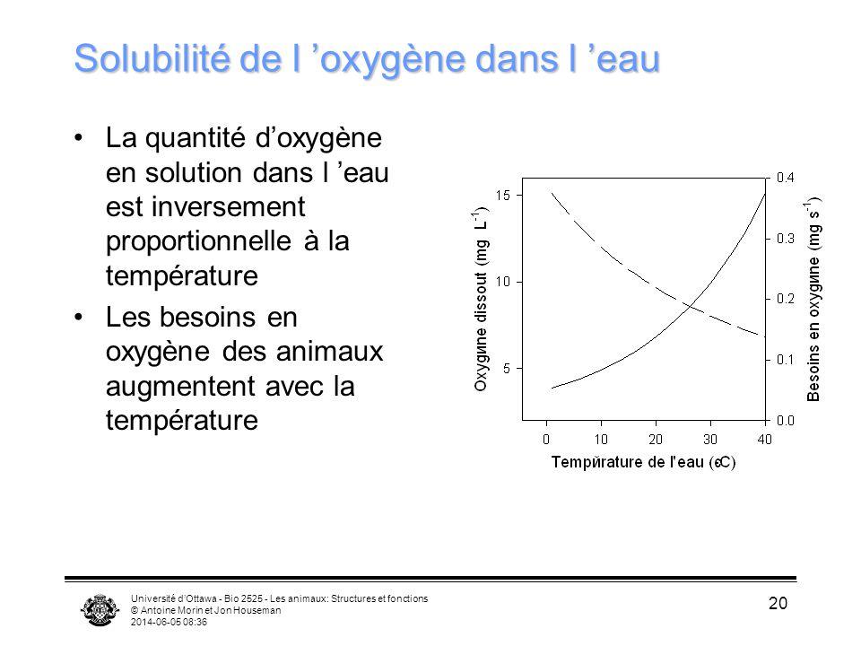 Université dOttawa - Bio 2525 - Les animaux: Structures et fonctions © Antoine Morin et Jon Houseman 2014-06-05 08:38 20 Solubilité de l oxygène dans