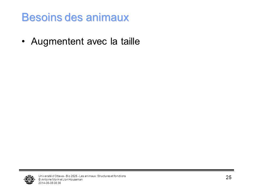 Université dOttawa - Bio 2525 - Les animaux: Structures et fonctions © Antoine Morin et Jon Houseman 2014-06-05 08:38 25 Besoins des animaux Augmenten