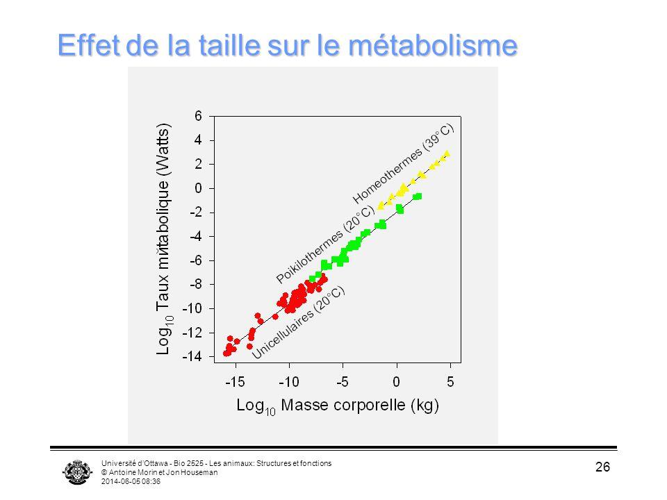 Université dOttawa - Bio 2525 - Les animaux: Structures et fonctions © Antoine Morin et Jon Houseman 2014-06-05 08:38 26 Effet de la taille sur le mét