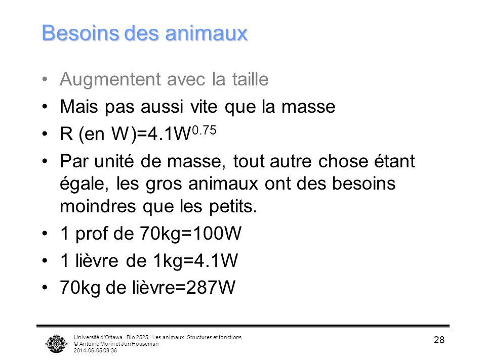 Université dOttawa - Bio 2525 - Les animaux: Structures et fonctions © Antoine Morin et Jon Houseman 2014-06-05 08:38 28 Besoins des animaux Augmenten