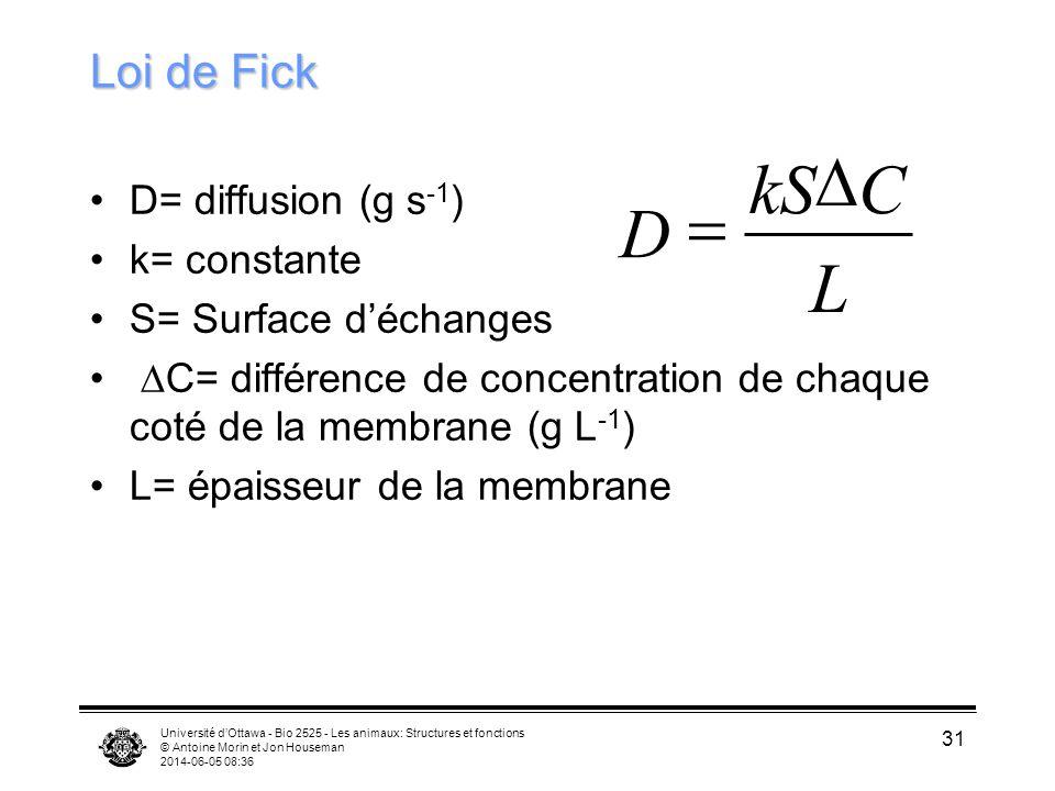 Université dOttawa - Bio 2525 - Les animaux: Structures et fonctions © Antoine Morin et Jon Houseman 2014-06-05 08:38 31 Loi de Fick D= diffusion (g s