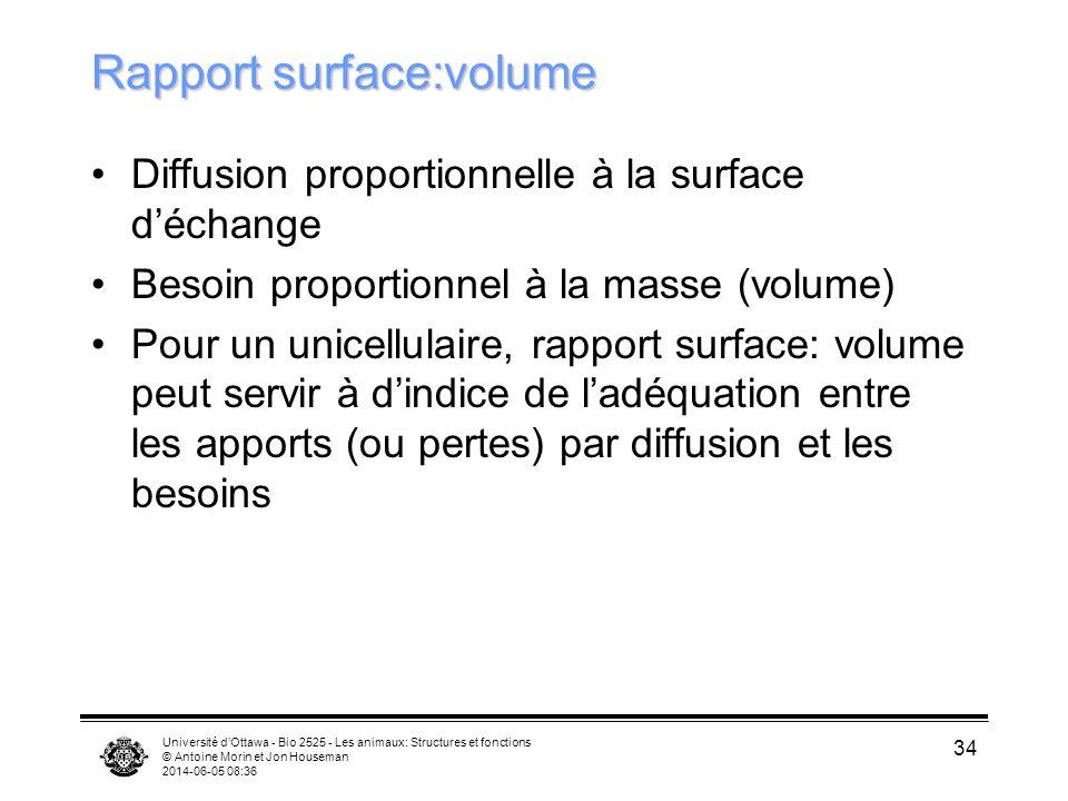 Université dOttawa - Bio 2525 - Les animaux: Structures et fonctions © Antoine Morin et Jon Houseman 2014-06-05 08:38 34 Rapport surface:volume Diffus
