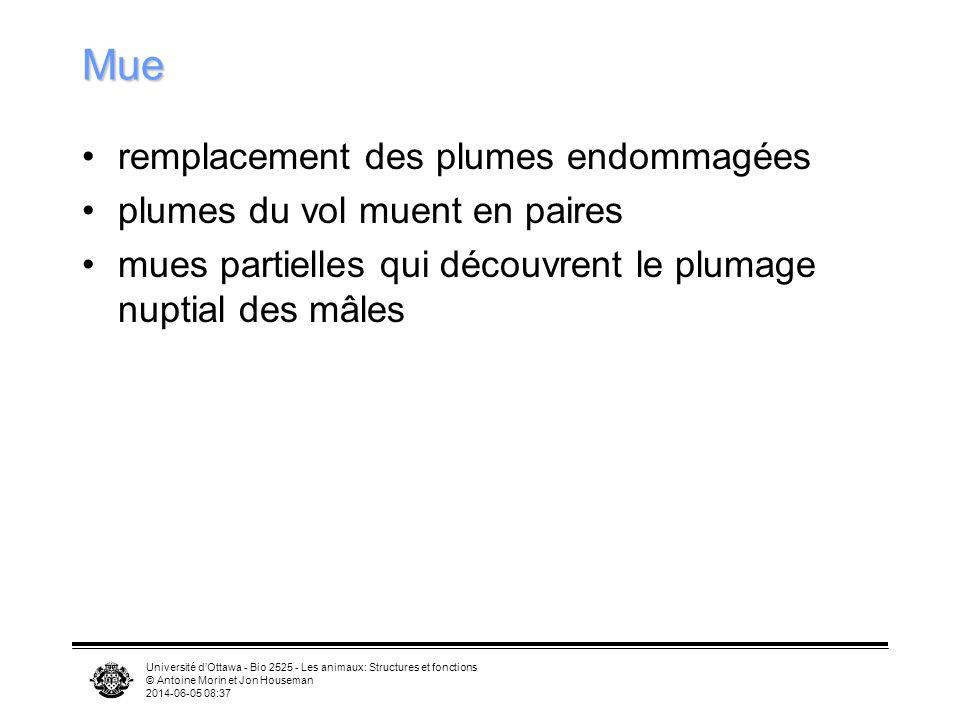 Université dOttawa - Bio 2525 - Les animaux: Structures et fonctions © Antoine Morin et Jon Houseman 2014-06-05 08:39 Plumes (suite) Couleur due –à de
