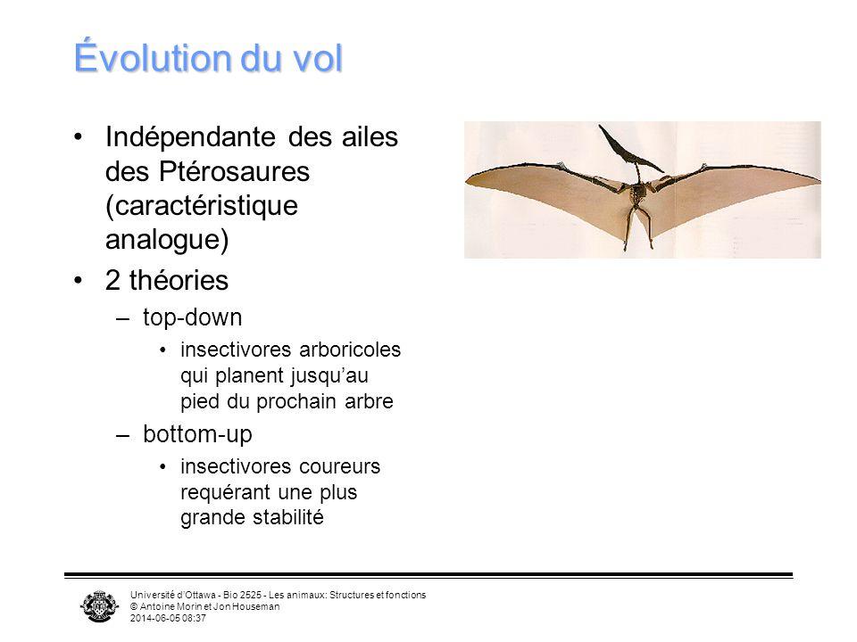 Université dOttawa - Bio 2525 - Les animaux: Structures et fonctions © Antoine Morin et Jon Houseman 2014-06-05 08:39 Mue remplacement des plumes endo
