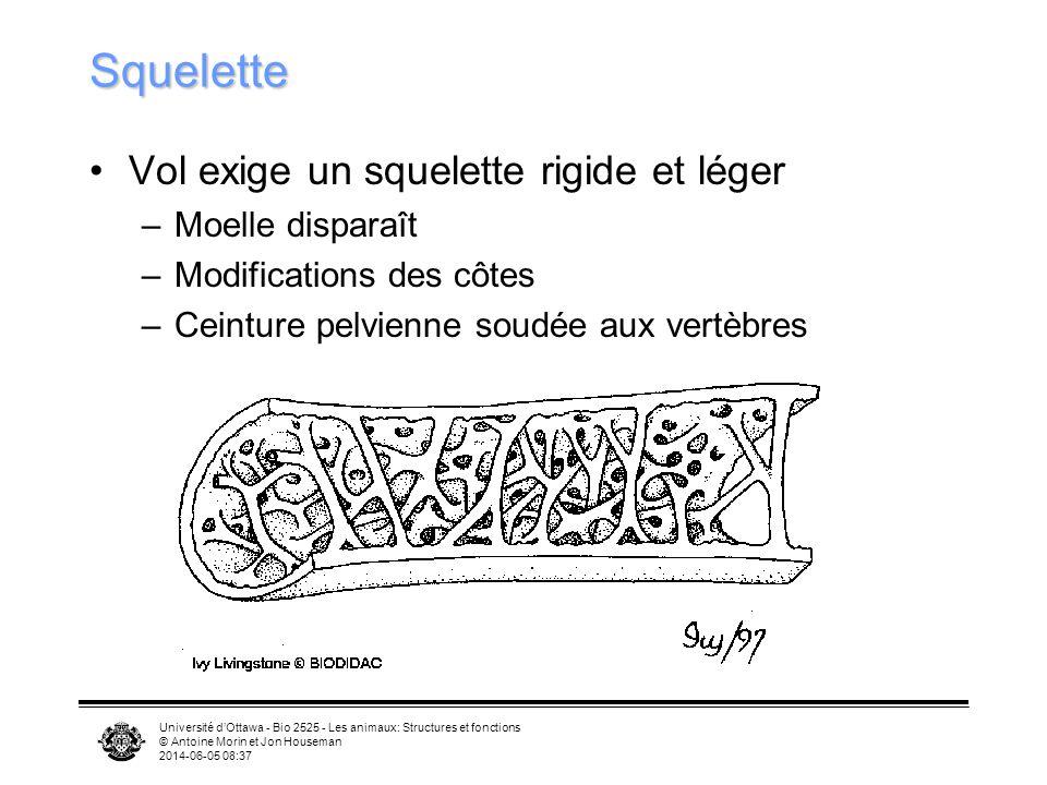 Université dOttawa - Bio 2525 - Les animaux: Structures et fonctions © Antoine Morin et Jon Houseman 2014-06-05 08:39 Vol Rapport Masse/(Surface des a