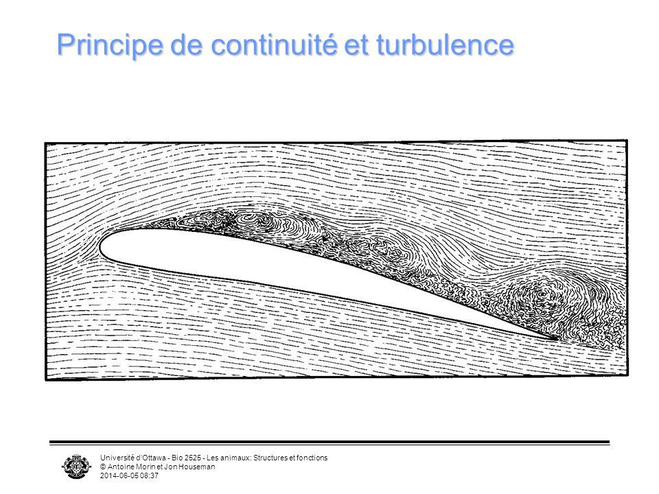 Université dOttawa - Bio 2525 - Les animaux: Structures et fonctions © Antoine Morin et Jon Houseman 2014-06-05 08:39 Aile: comment ça marche? Cambrur